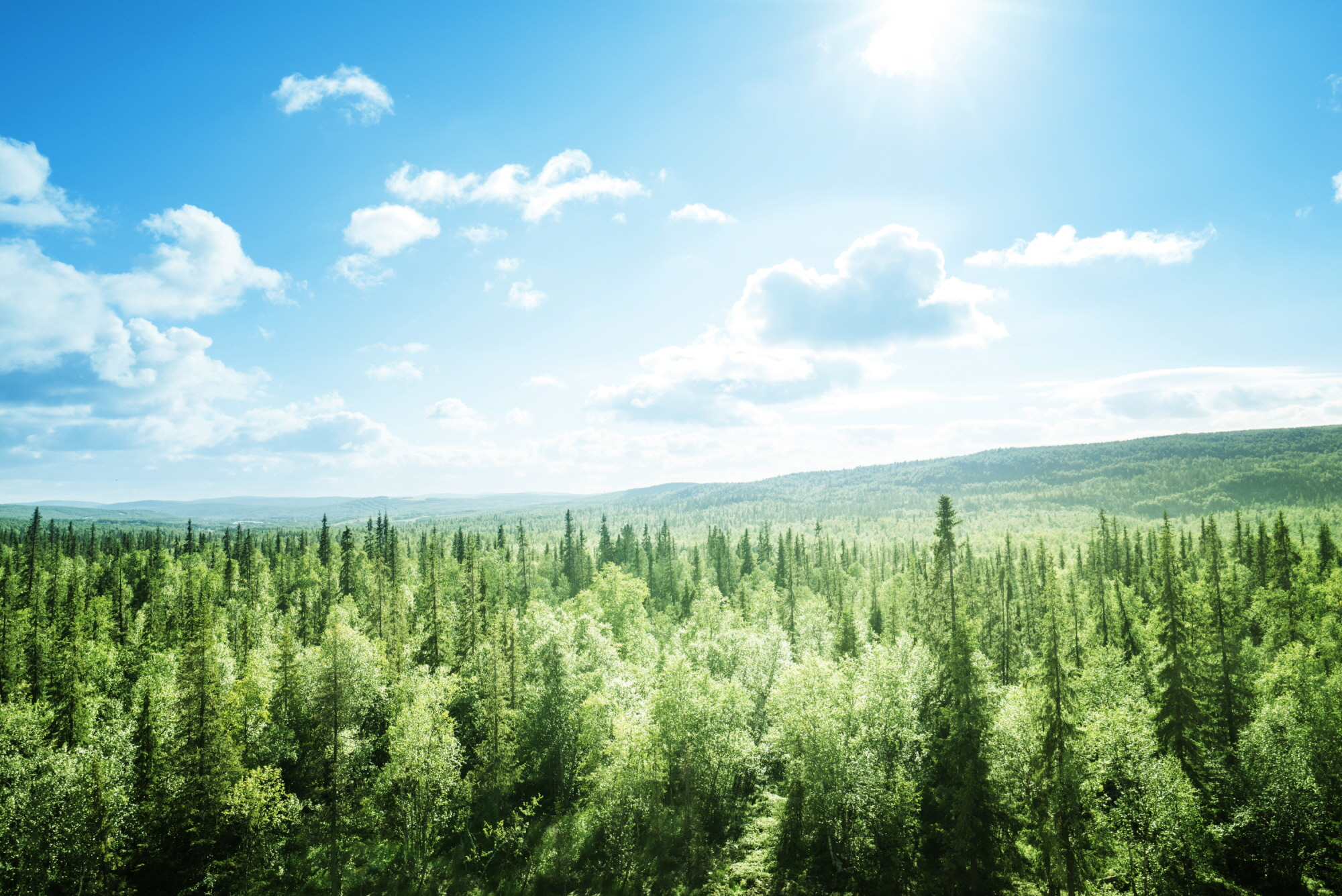 A landscape shot of sprawling green forest with the sun shining through a clear blue sky