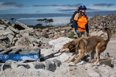 A trained search dog helping the crew remove rubble from collapsed buildings.